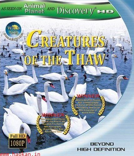 2009动物星球之惊奇之岛